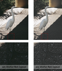 ME_ibis_small_fr