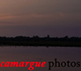 carmague_photo